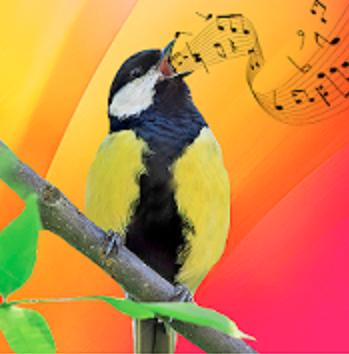 bird sound2